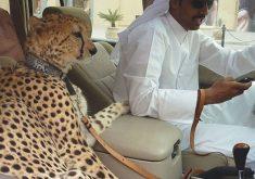 18 کار باورنکردنی که فقط در دوبی میتوانید انجام دهید