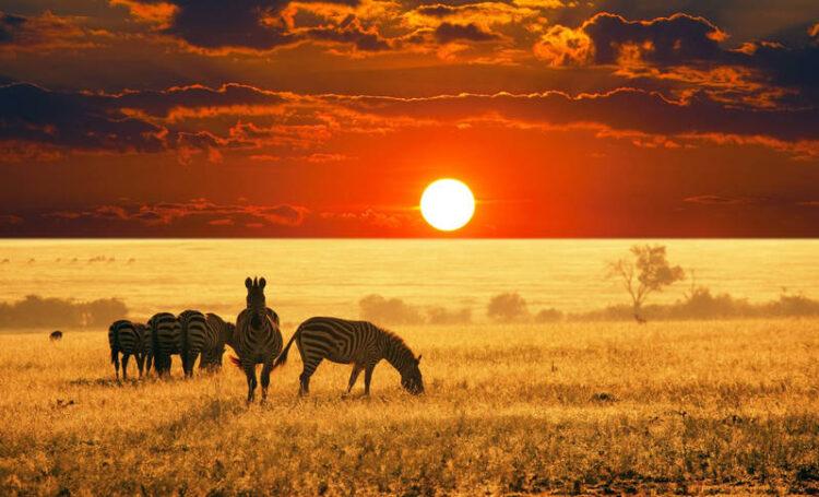 راهنمای سفر به کنیا
