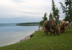 15 جاذبه گردشگری مغولستان