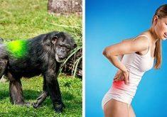 7 نشانه مبنی بر اینکه انسان هنوز در حال تکامل است