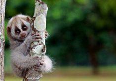 10 حیوان بامزه که میتوانند شما را از بین ببرند