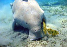 25 پستاندار آبی شگفتانگیز