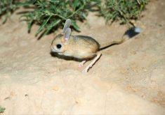 25 جانور کوچک در جهان که باور نمیکنید واقعی باشند
