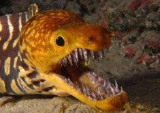 10 جاندار عجیبالخلقه و شگفت انگیز در اعماق دریا