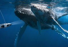 25 پدیده عجیب دریاها که توضیحی برای آنها وجود ندارد