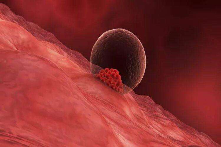 نشانه های خونریزی لانه گزینی جنین و شروع بارداری چیست؟