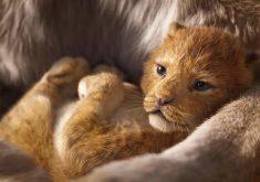 اولین تریلر فیلم مورد انتظار The Lion King منتشر شد + ویدئو