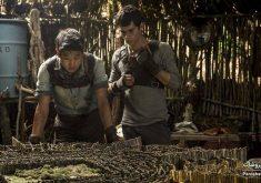"""معرفی فیلم """"دونده هزارتو"""" (The Maze Runner)؛ تلاش برای نجات یافتن در دنیایی ناشناخته"""