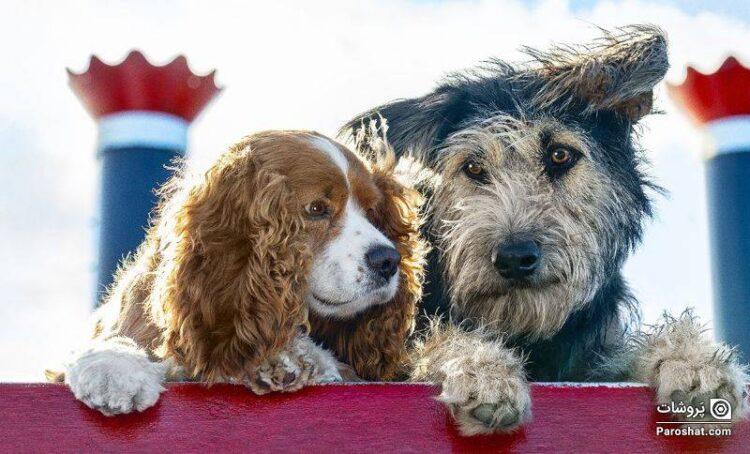 """معرفی فیلم """"لیدی و ولگرد"""" (Lady and the Tramp)؛ داستانی از ماجراجویی سگها در دنیای انسانها"""