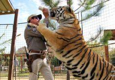 """5 سریال جذاب و دیدنی شبیه سریال """"ببر پادشاه"""" (Tiger King) که باید تماشا کنید"""